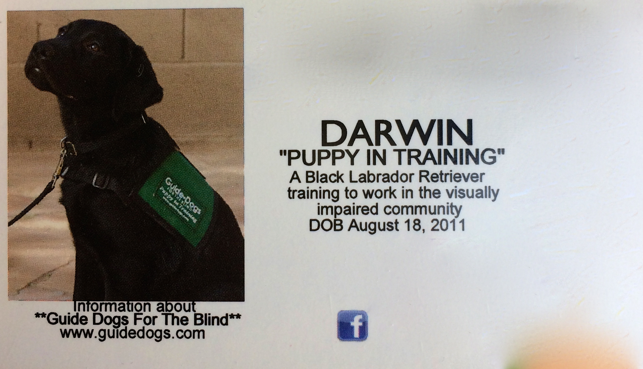 My First Business Card Darwin The Diabetic Alert Dog